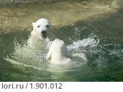 Купить «Медвежата играют в воде», фото № 1901012, снято 8 мая 2010 г. (c) Щеголева Ольга / Фотобанк Лори