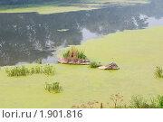 Купить «Река затянутая ряской», фото № 1901816, снято 8 августа 2010 г. (c) Екатерина Овсянникова / Фотобанк Лори