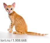 Двухмесячный рыжий котенок. Стоковое фото, фотограф Ирина Кожемякина / Фотобанк Лори