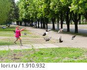 Девочка гоняет голубей. Стоковое фото, фотограф Сергей Шульгин / Фотобанк Лори