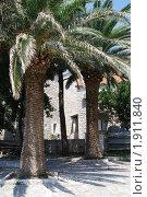 Купить «Будва, Черногория, пальмы», фото № 1911840, снято 2 августа 2009 г. (c) Верещагина Дарья / Фотобанк Лори