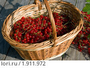 Купить «Красная смородина», эксклюзивное фото № 1911972, снято 15 августа 2010 г. (c) Александр Алексеев / Фотобанк Лори