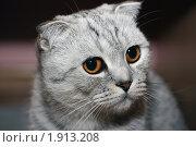 Купить «Вислоухая кошка», эксклюзивное фото № 1913208, снято 18 августа 2010 г. (c) Инна Козырина (Трепоухова) / Фотобанк Лори