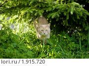 Кошка под елью. Стоковое фото, фотограф Денис Петров / Фотобанк Лори