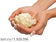 Купить «Женские руки и роза», фото № 1920096, снято 18 июля 2010 г. (c) Сергей Дашкевич / Фотобанк Лори