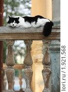 Купить «Портрет красивого кота», фото № 1921568, снято 30 июля 2010 г. (c) Михаил Митин / Фотобанк Лори