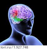 Купить «Мозг», иллюстрация № 1927748 (c) Лукиянова Наталья / Фотобанк Лори