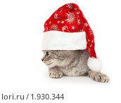 Купить «Котенок (британец) в колпаке Санта-Клауса», фото № 1930344, снято 22 августа 2010 г. (c) Юлия Машкова / Фотобанк Лори