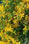 Букет желтых цветов, фото № 1930672, снято 18 июня 2007 г. (c) Мурзенко Татьяна / Фотобанк Лори