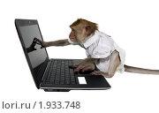 Офисный работник - обезьяна с ноутбуком. Стоковое фото, фотограф Ирина Кожемякина / Фотобанк Лори