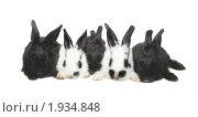 Купить «Пять крольчат на белом фоне», фото № 1934848, снято 3 августа 2010 г. (c) Васильева Татьяна / Фотобанк Лори