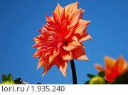 Купить «Красный крупный цветок георгина на фоне голубого неба», фото № 1935240, снято 10 октября 2009 г. (c) Надежда Келембет / Фотобанк Лори