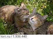 Поцелуй любимой. Стоковое фото, фотограф Жаренов Александр / Фотобанк Лори