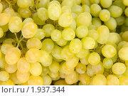Купить «Виноград», фото № 1937344, снято 18 августа 2010 г. (c) Елена / Фотобанк Лори