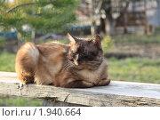 Купить «Кот на лавочке», фото № 1940664, снято 4 апреля 2010 г. (c) Мариэлла Зинченко / Фотобанк Лори
