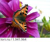 Бабочка. Стоковое фото, фотограф Ольга Стрейкмане / Фотобанк Лори