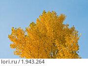 Жёлто-золотистый на голубом фоне. Стоковое фото, фотограф Евгений Ореховский / Фотобанк Лори