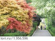 Купить «Весна в парке», фото № 1956596, снято 16 апреля 2008 г. (c) Ольга Липунова / Фотобанк Лори