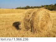 Купить «Стог сена в поле», фото № 1966236, снято 14 августа 2010 г. (c) Дмитрий Грушин / Фотобанк Лори