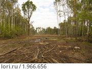 Купить «Вырубка Химкинского леса под автотрассу», эксклюзивное фото № 1966656, снято 11 сентября 2010 г. (c) Владимир Чинин / Фотобанк Лори