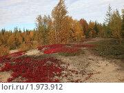 Осень в лесу. Стоковое фото, фотограф Нестерова Юлия / Фотобанк Лори