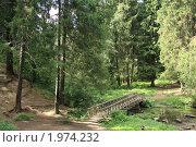Мостик через лесную речку. Стоковое фото, фотограф Голов Евгений Юрьевич / Фотобанк Лори