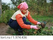 Купить «Вот такая нынче уродилась редька», фото № 1974436, снято 14 сентября 2010 г. (c) Александр Мишкин / Фотобанк Лори