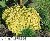 Купить «Колеус золотой на клумбе», эксклюзивное фото № 1978864, снято 5 сентября 2010 г. (c) Алёшина Оксана / Фотобанк Лори