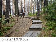 Купить «Деревянная лестница с перилами в сосновом лесу», фото № 1979532, снято 14 июня 2010 г. (c) pzAxe / Фотобанк Лори