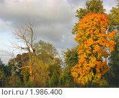 Купить «Два дерева: осенний пейзаж», фото № 1986400, снято 24 сентября 2008 г. (c) Валентина Троль / Фотобанк Лори