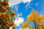 Осенние краски, фото № 1989016, снято 21 сентября 2010 г. (c) Наталья Волкова / Фотобанк Лори