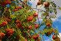 Осенние краски, фото № 1993380, снято 21 сентября 2010 г. (c) Наталья Волкова / Фотобанк Лори