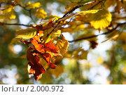 Купить «Осенние листья», фото № 2000972, снято 20 ноября 2018 г. (c) Светлана Привезенцева / Фотобанк Лори