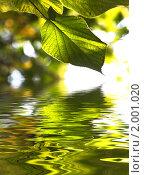 Купить «Зеленые листья», фото № 2001020, снято 19 октября 2018 г. (c) Светлана Привезенцева / Фотобанк Лори