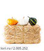 Купить «Тыквы на сене», фото № 2005252, снято 9 октября 2009 г. (c) Наталия Кленова / Фотобанк Лори
