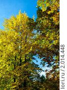 Осень.Желтая листва. Стоковое фото, фотограф Андрей Дегтярев / Фотобанк Лори