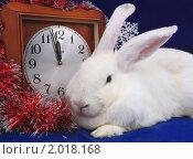 Купить «Белый кролик с часами», фото № 2018168, снято 18 сентября 2010 г. (c) Старостин Сергей / Фотобанк Лори