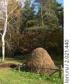 Стог сена у березы. Стоковое фото, фотограф Алёна Самойликова / Фотобанк Лори