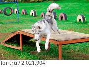 Купить «Собака на учебно-дрессировочной площадке», фото № 2021904, снято 2 октября 2010 г. (c) Сергей Лаврентьев / Фотобанк Лори