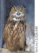 Купить «Филин в зоопарке», фото № 2026640, снято 17 августа 2006 г. (c) Ольга Липунова / Фотобанк Лори