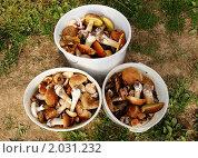 Купить «Грибной улов», фото № 2031232, снято 12 сентября 2010 г. (c) Елена Ильина / Фотобанк Лори