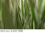 Купить «Полевые травы», фото № 2031948, снято 4 июля 2010 г. (c) Евгений Савенков / Фотобанк Лори
