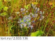 Купить «Голубая трава», эксклюзивное фото № 2033136, снято 7 августа 2010 г. (c) Анатолий Матвейчук / Фотобанк Лори
