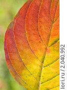 Купить «Осенний лист», эксклюзивное фото № 2040992, снято 9 октября 2010 г. (c) Александр Алексеев / Фотобанк Лори