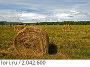 Купить «Тюки сена на поле», фото № 2042600, снято 31 июля 2010 г. (c) Ольга Денисова / Фотобанк Лори
