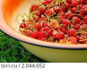 Купить «Садовая клубника в тазу», фото № 2044652, снято 3 июля 2010 г. (c) Светлана Зарецкая / Фотобанк Лори