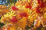 Рябина красная в контровом свете, фото № 2045072, снято 21 сентября 2010 г. (c) Наталья Волкова / Фотобанк Лори