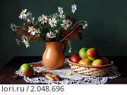 Купить «Осенний натюрморт с ромашками яблоками», фото № 2048696, снято 23 августа 2010 г. (c) Julia Ovchinnikova / Фотобанк Лори