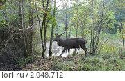 Купить «Олень в лесу», фото № 2048712, снято 10 октября 2010 г. (c) Татьяна Кахилл / Фотобанк Лори