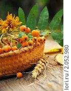 Купить «Осенний натюрморт с рябиной в плетеной корзине», фото № 2052980, снято 10 августа 2010 г. (c) Светлана Зарецкая / Фотобанк Лори